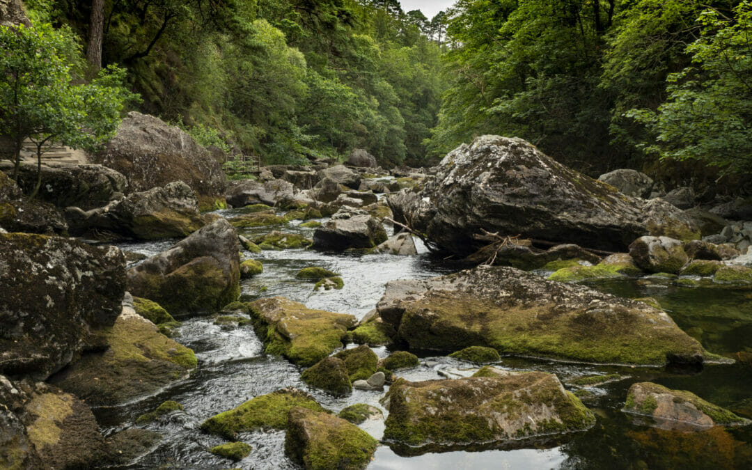 WelshotRewards Day – Walking with Your Camera –   A Guided Photo-Walk with Helen Iles:  Beddgelert