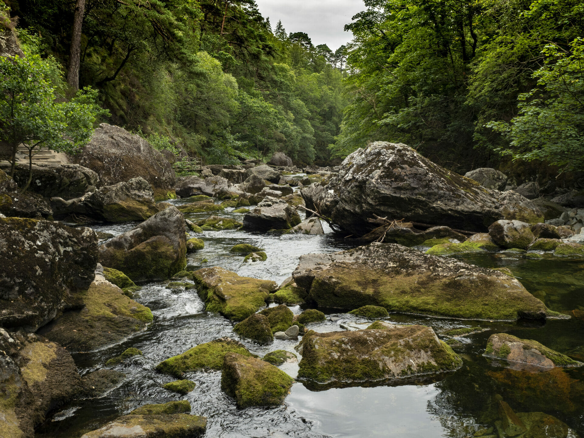 Photo of Green Trees alongside the Glaslyn river in Beddgelert, Snowdonia National Ark, North Wales. Taken by Eifion Williams on a Waling With Helen Iles Photo Walk for Welshot Imaging Photographic Academy