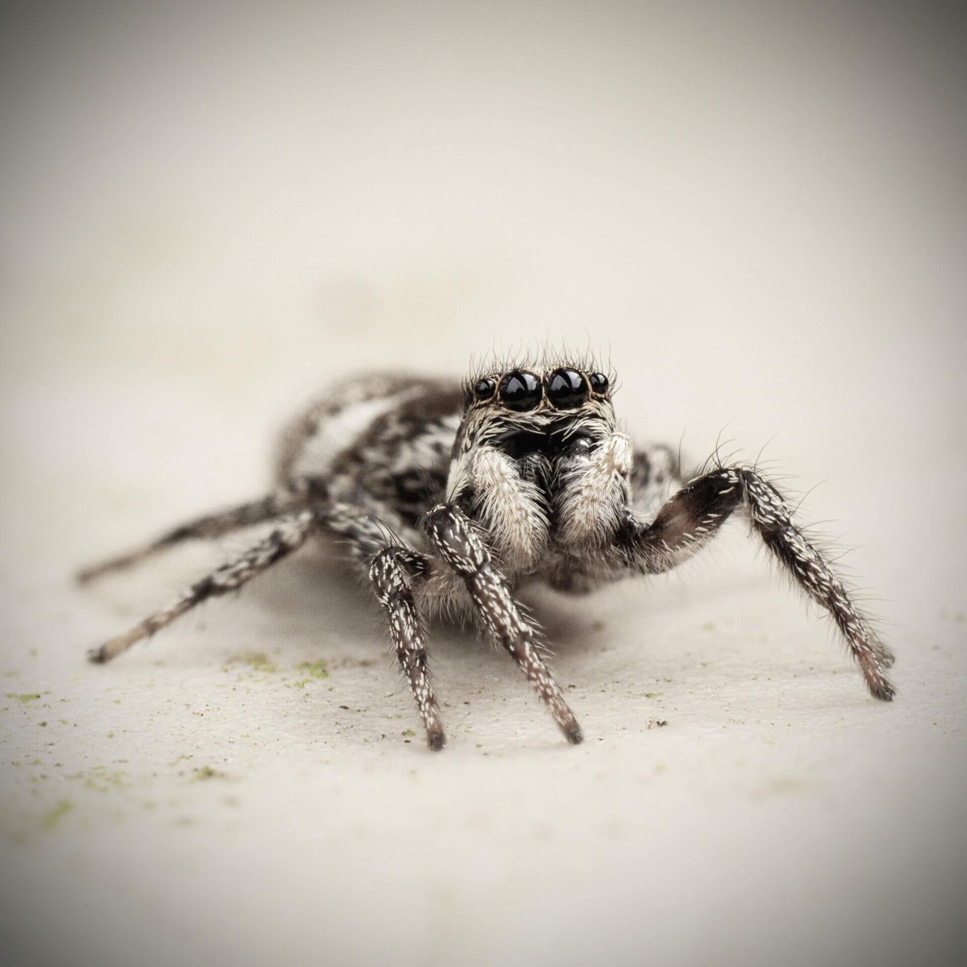 Macro / Close-Up Photograph of a garden spider
