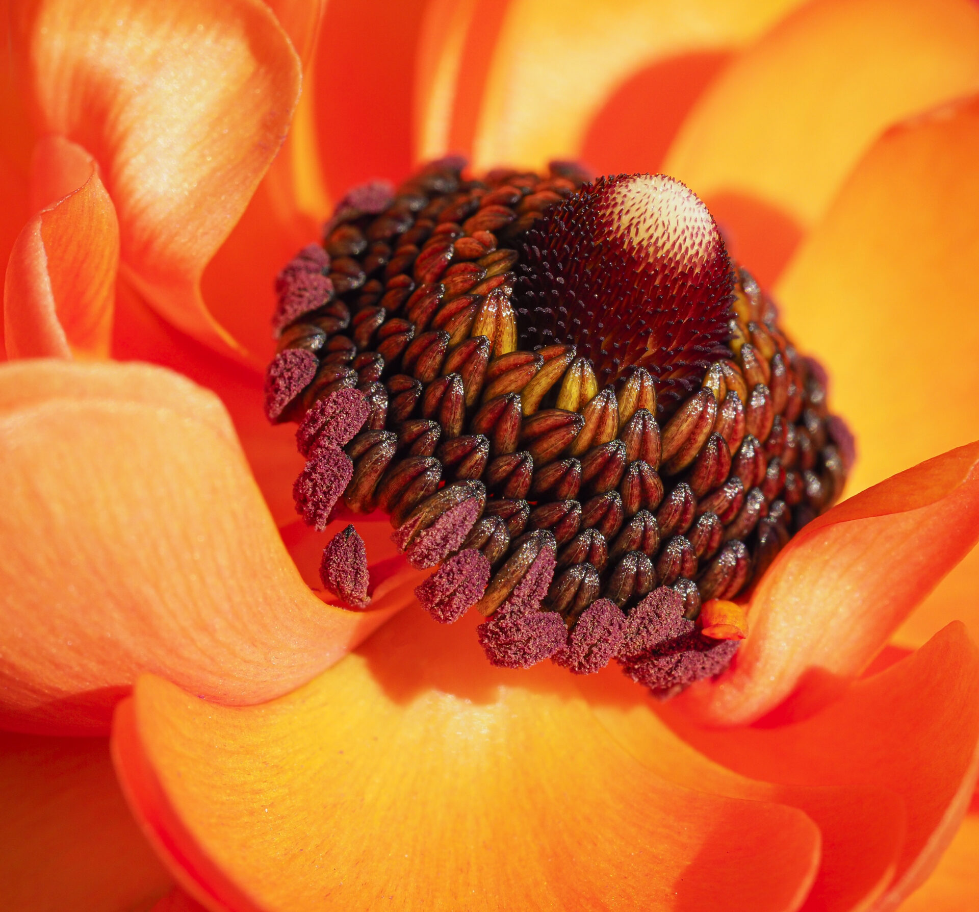 Close-Up photo of an orange flower